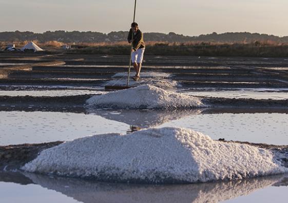 recolte du sel